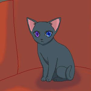 子猫シエル