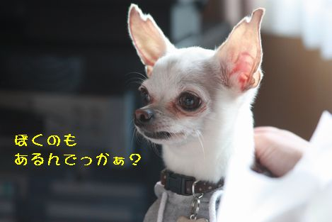 IMG_9175.jpg