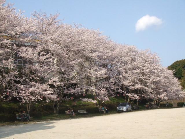2008_0408しだれ桜0020