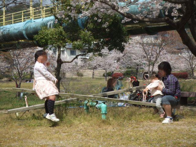 2008_0406花見0020