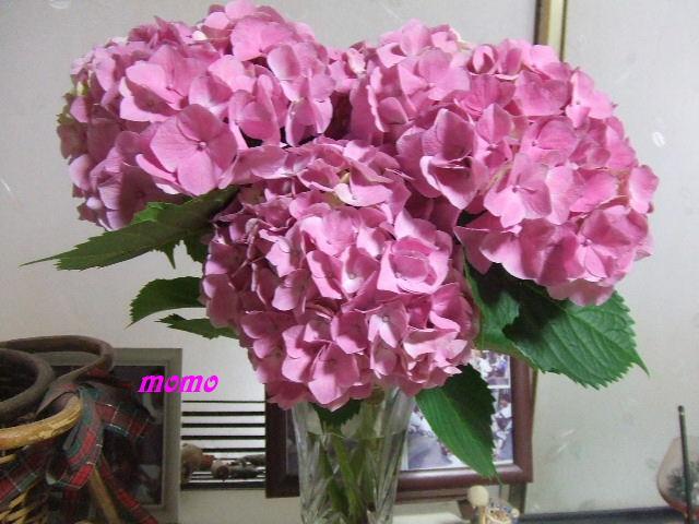 2008_0611梅0013