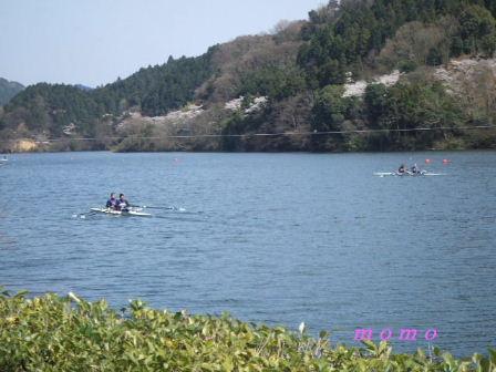 2009_0402桜0006