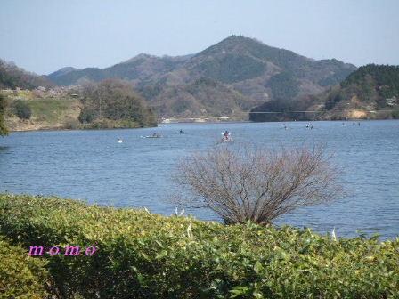 2009_0402桜0012