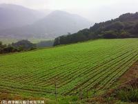 01.中山峠(2009年8月29日)