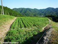 03.中山峠(2009年9月7日)