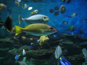 須磨水族館2