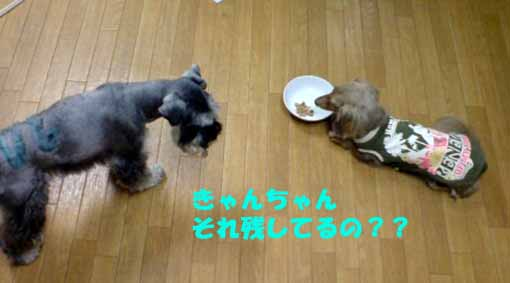20080918185906.jpg