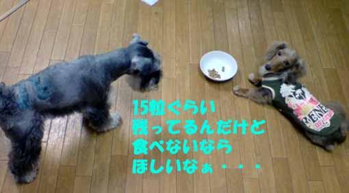 20080918185930.jpg