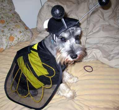 Halloween in DC, 2008 135