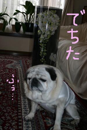 IMG_3689あねぶけ