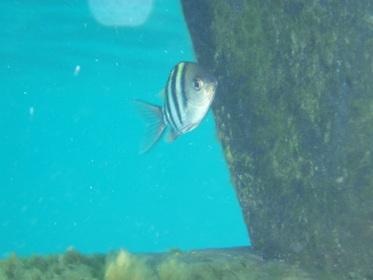P6190447魚あね2