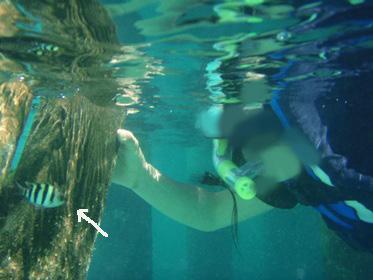 P6200573魚あねと泳ぐにゃんた