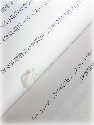 p090407_1.jpg