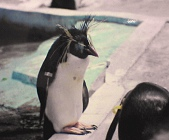 天王寺動物園ペンギン
