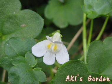 白花コロセウムH20 4