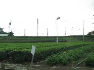 茶畑H21 7.4