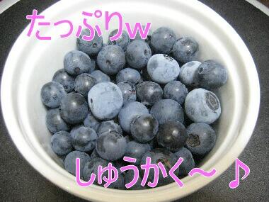 収穫~ H21 8.7
