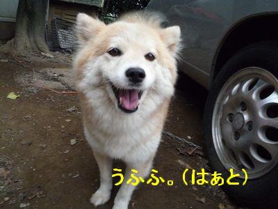 カワユシ笑顔