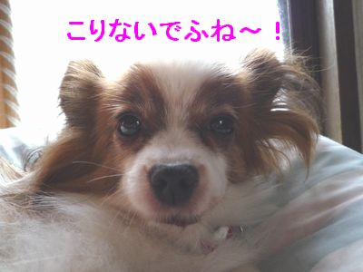 THE DOG?2