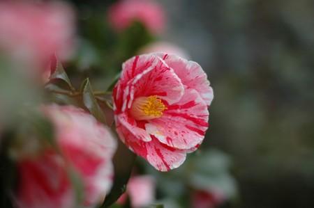 庭の花々1