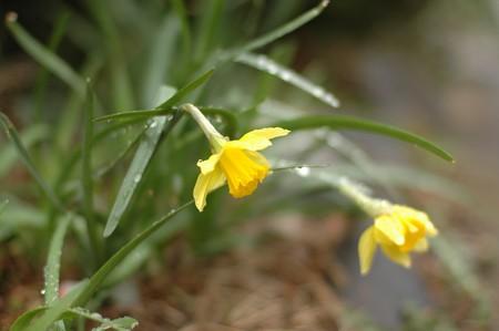 庭の花々2