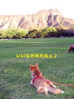 2IMG_5145_convert_20081119063844.jpg