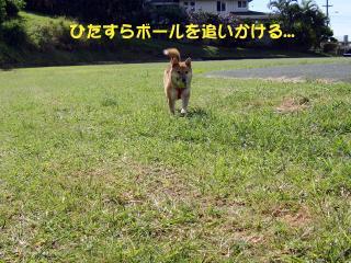 3DSC01273_convert_20090318050425.jpg