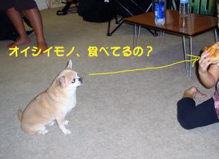 DSC01141_convert_20090120042021.jpg