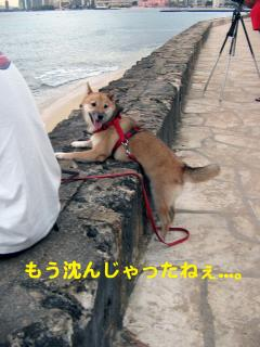 IMG_5160_convert_20081105041238.jpg