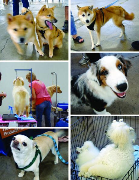 dogs-1_convert_20090513083842.jpg