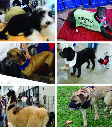 dogs-2_convert_20090513083917.jpg