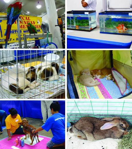 dogs-3_convert_20090513084008.jpg
