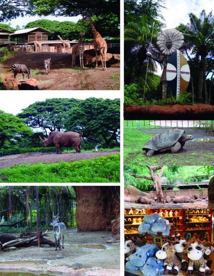zoo-2_convert_20090117090703.jpg