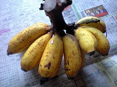 banana-tokunoshima.jpg