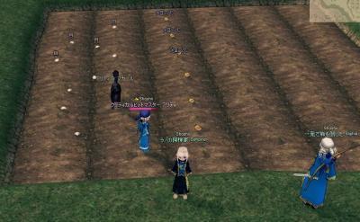 メロンパン栽培