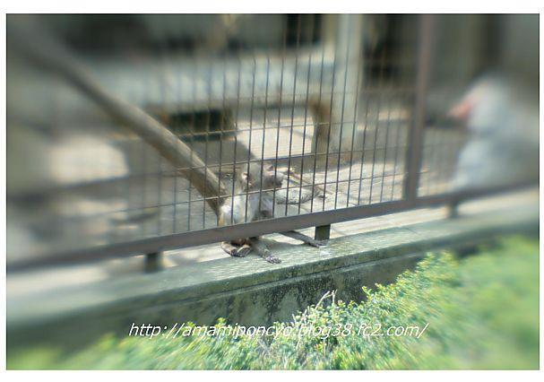 t_動物園