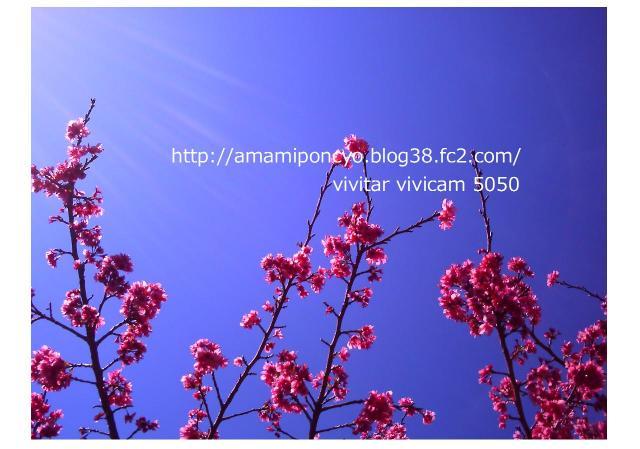 blog1_convert_20090613105931.jpg