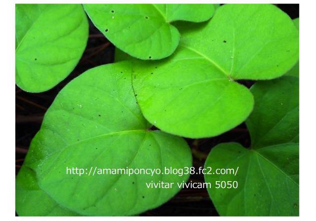 blog2_convert_20090613110030.jpg