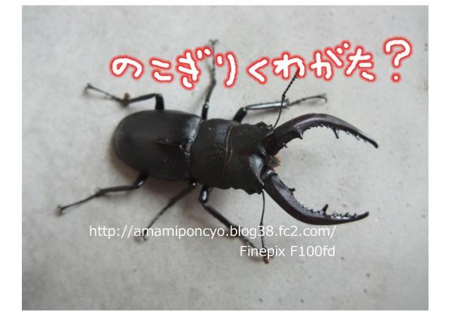 noko_convert_20090625203933.jpg
