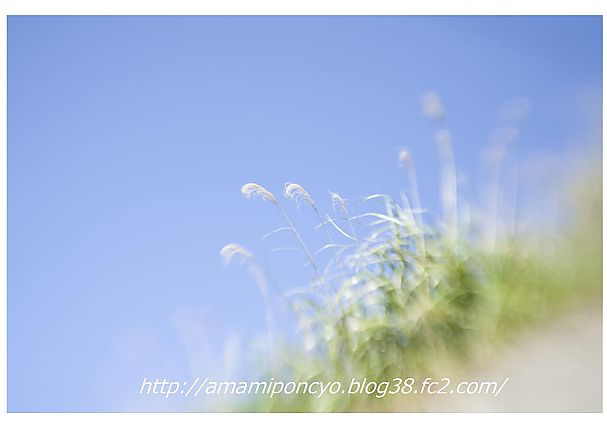 t_amami10.jpg