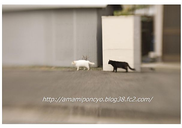t_amami4.jpg