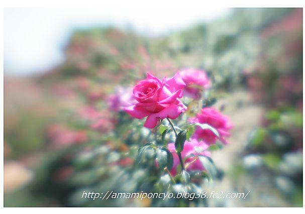 t_baraen9_20090520142018.jpg