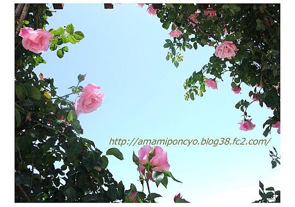 t_baraen_20090520141932.jpg