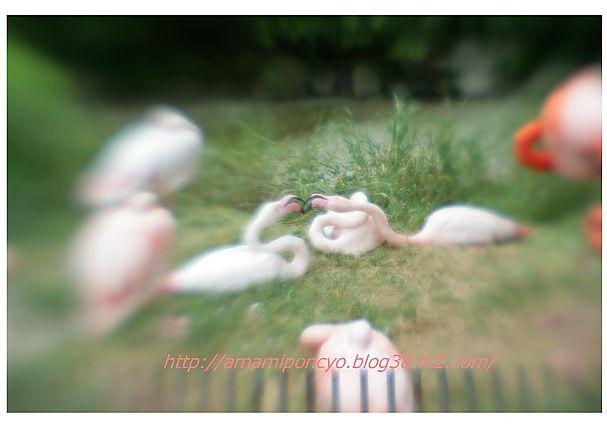 t_furamingo.jpg