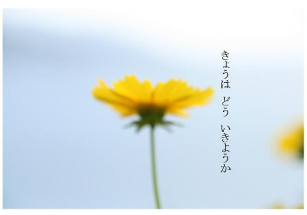 t_hana.jpg