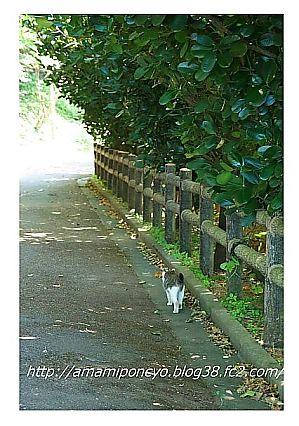 t_t_ogamiyama3.jpg