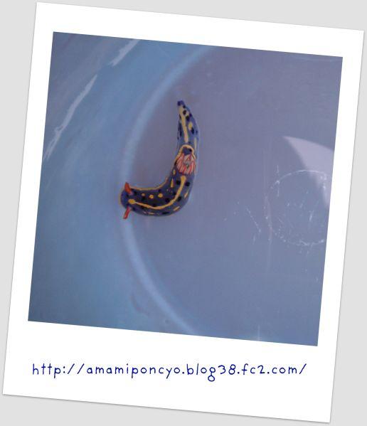 umiusi_20090902160223.jpg