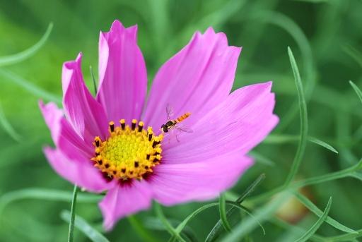 ピンクと蜂