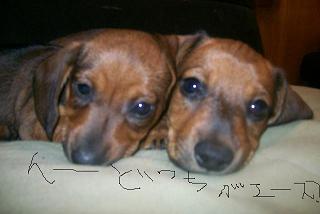 Puppy23