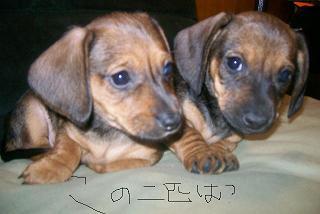 Puppy56